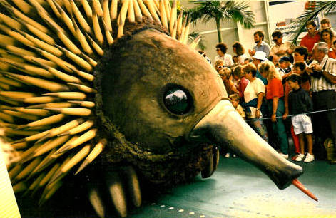 An Australian echidna - ant-eater - joins the Day Parade